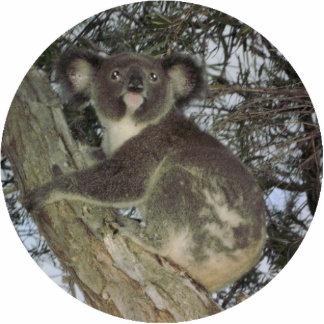 Koala Christmas Ornament Photo Sculpture Ornament