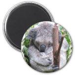 Koala Cuddle Magnets