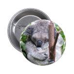 Koala Cuddle Pin