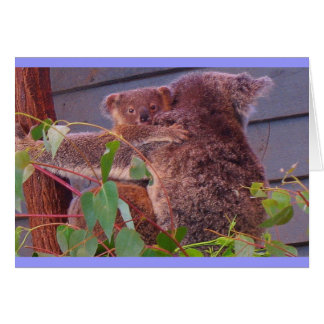 Koala cuddles greeting card
