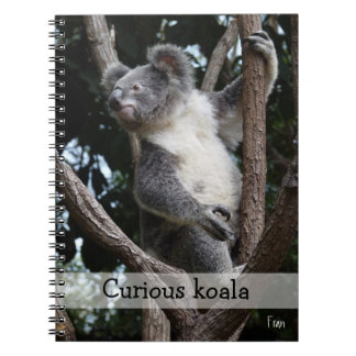koala curiosa libretas