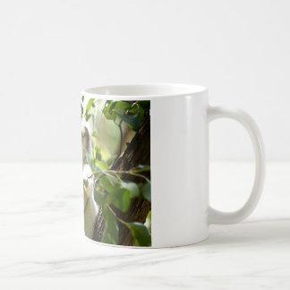 Koala cutie classic white coffee mug