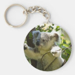 Koala cutie keychains