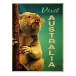 Koala de Australia Tarjetas Postales