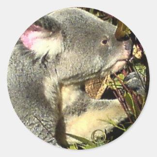 Koala de Gumtree Pegatinas Redondas