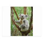 Koala de Kuddly Postal