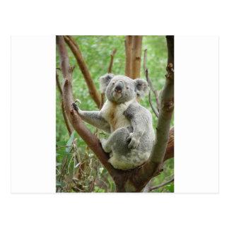 Koala de Kuddly Tarjetas Postales