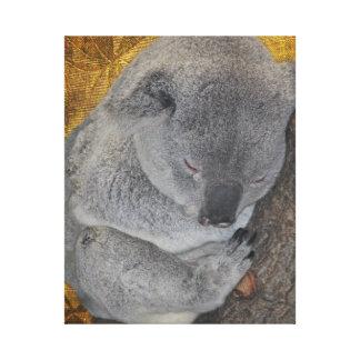 Koala de la abrazo Napping Impresion De Lienzo