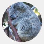 Koala de la empanada de Cutie Etiquetas Redondas