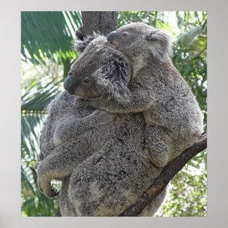 Koala del poster y foto ZIZZAGO de Australia de lo
