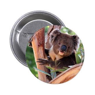 Koala del Victorian Pin