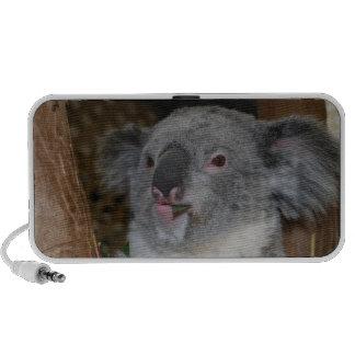 Koala Doodle Speakers