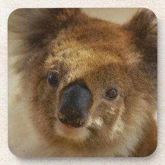 Koala Drink Coaster