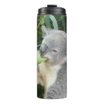 Koala Eating Gum Leaf Drink Bottle