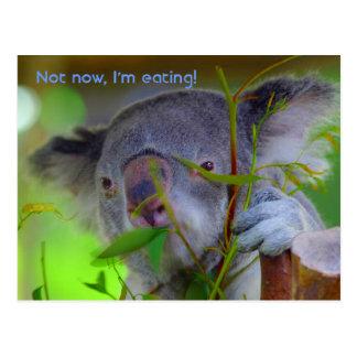 Koala Eating Post Card