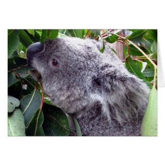 koala eats card