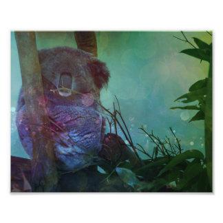 """""""Koala el dormir """" Fotografía"""