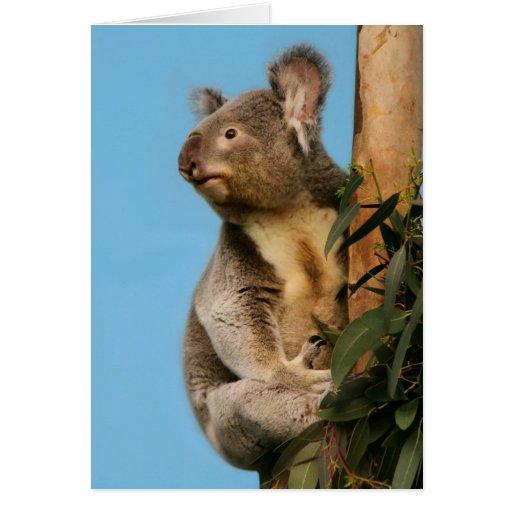 Koala en árbol de eucalipto tarjeta de felicitación