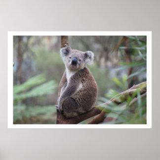 Koala en árbol impresiones