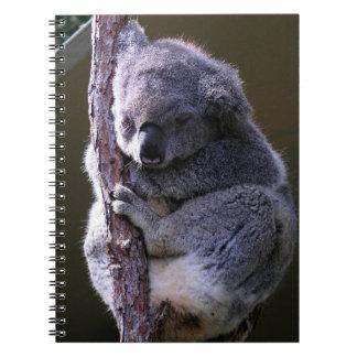 Koala en cuaderno del árbol