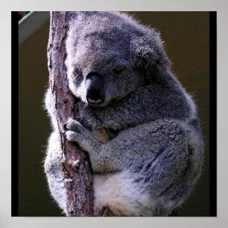 Koala en poster del árbol póster