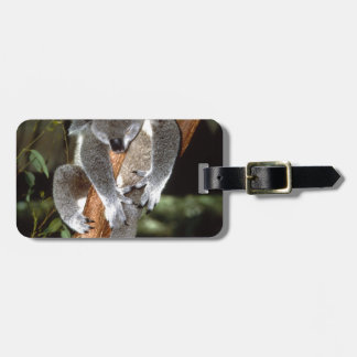 koala etiquetas maleta