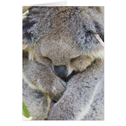 Koala Felicitacion