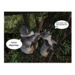 Koala fun postcard