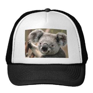 Koala Gorros