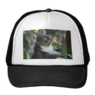Koala Gorras De Camionero