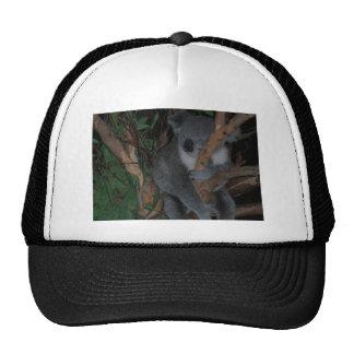Koala Gorros Bordados