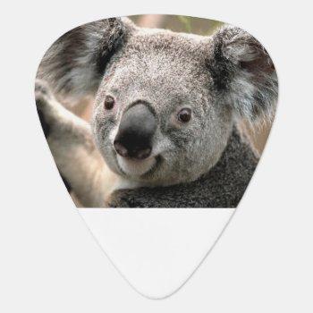 Koala Guitar Picks by Poverty_Shop at Zazzle