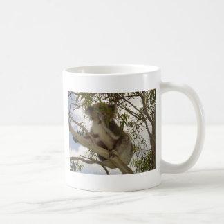 Koala hambrienta tazas de café