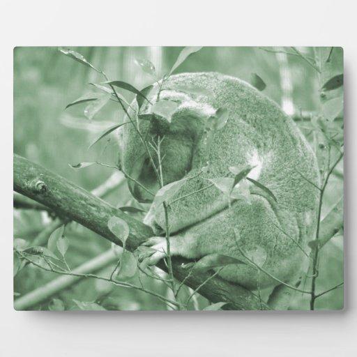 koala head down sleeping green c plaque