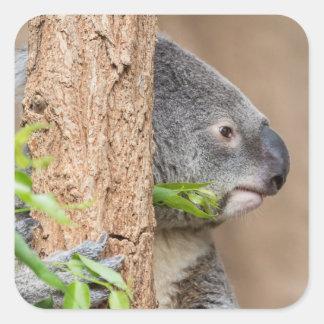Koala Headshot Square Sticker