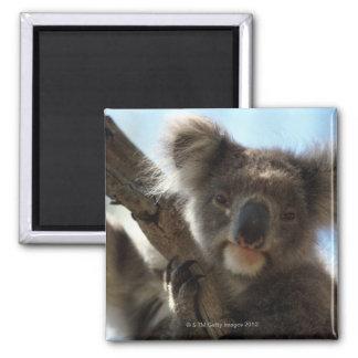 koala imán cuadrado