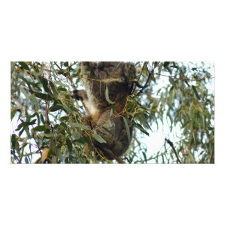 Koala in Australia Card