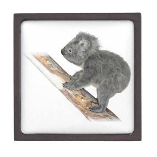 Koala In Profile Climbing Keepsake Box