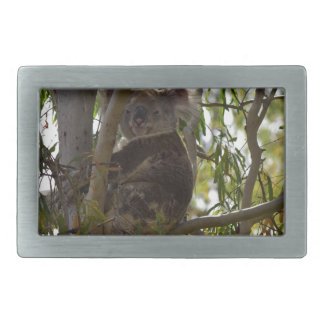 KOALA IN RURAL QUEENSLAND AUSTRALIA BELT BUCKLE