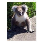 Koala in the wild postcard
