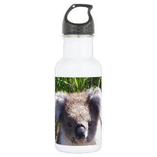 Koala in the wild water bottle