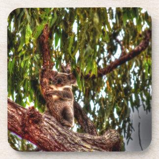 KOALA IN TREE AUSTRALIA ART EFFECTS COASTER