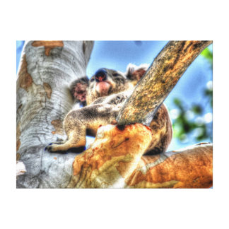 KOALA IN TREE AUSTRALIA WITH ART EFFECTS CANVAS PRINT