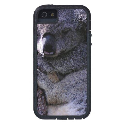 Koala in Tree iPhone 5 Cases