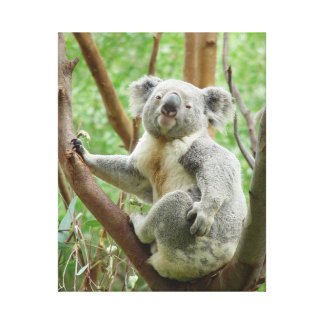 KOALA IN TREE Photograph Wrapped Canvas Wall Art Stretched Canvas Print