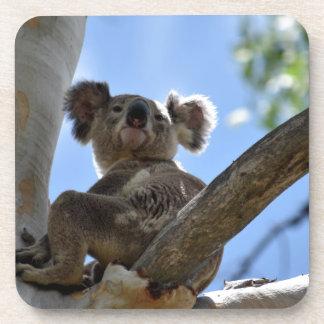 KOALA IN TREE RURAL QUEENSLAND AUSTRALIA BEVERAGE COASTER