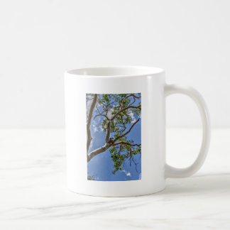 KOALA IN TREE RURAL QUEENSLAND AUSTRALIA COFFEE MUG