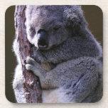 Koala in Tree Set of Six Coasters