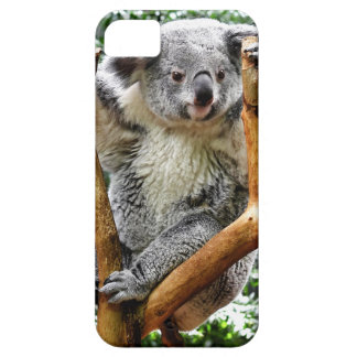 Koala iPhone SE/5/5s Case