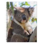 Koala Journals